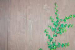 Herbe verte de ressort frais et usine de feuille au-dessus du fond en bois de barrière Photos libres de droits