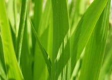 Herbe verte de source couverte par le soleil Photos libres de droits