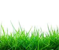 Herbe verte de source fraîche Photographie stock libre de droits