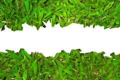 Herbe verte de source fraîche avec l'espace de copie. Photos stock