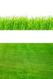 Herbe verte de source fraîche d'isolement sur le blanc Photographie stock libre de droits