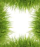 Herbe verte de source fraîche sur le fond blanc Photo libre de droits