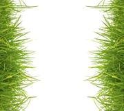 Herbe verte de source fraîche sur le fond blanc Images libres de droits