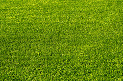 Herbe verte de terrain de football Texture Photos libres de droits