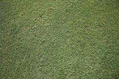 Herbe verte du golf Photo libre de droits