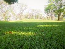 Herbe verte en parc Photos stock