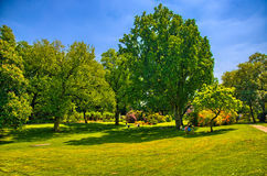Herbe verte en parc ensoleillé, bourdonnement op de Begren Photo stock