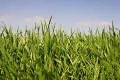 Herbe verte en soleil. Photographie stock libre de droits