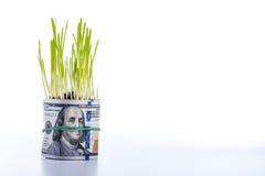 Herbe verte et billet d'un dollar Image stock