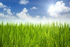 Herbe verte et ciel Photos stock