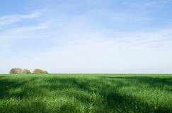 Herbe verte et ciel bleu Photographie stock