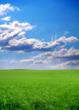 Herbe verte et ciel bleu Photo libre de droits