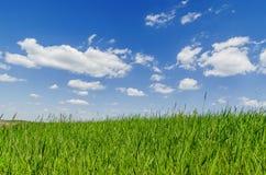 Herbe verte et ciel bleu avec des nuages Photos stock
