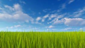 Herbe verte et ciel bleu avec les nuages 4K banque de vidéos