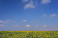 Herbe verte et ciel d'usine et bleu jaune Photos libres de droits