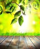 Herbe verte et feuilles de ressort frais avec le plancher vert de bokeh, de lumière du soleil et en bois Image libre de droits