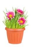 Herbe verte et fleurs dans un bac photo stock