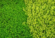 Herbe verte et jaune de couleur différente photos libres de droits