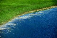 Herbe verte et lac Photos libres de droits