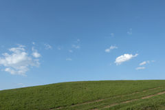 Herbe verte et le ciel bleu Image stock