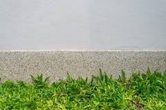 Herbe verte et mur Image stock