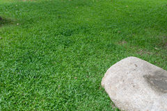 Herbe verte et pierre Images stock