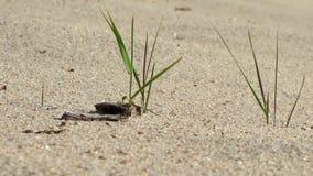 Herbe verte et terre sèche chaude banque de vidéos