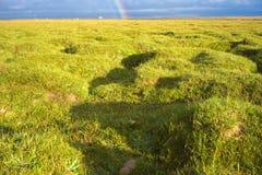 Herbe verte et un arc-en-ciel Photos libres de droits
