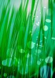Herbe verte, feux verts et rayons sur le fond en bon état, backgro texturisé d'éclairage, herbe numérique de fibre, baisses de ro illustration de vecteur