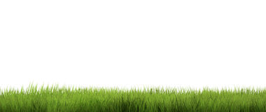 Herbe verte Fond de nature d'herbe 3d rendent Photos libres de droits