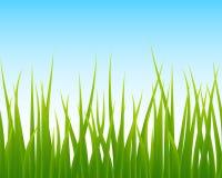 Herbe verte, fond sans couture de ciel bleu Photographie stock libre de droits
