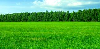 Herbe verte fraîche Photographie stock