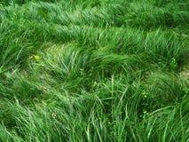 Herbe verte fraîche Photos libres de droits