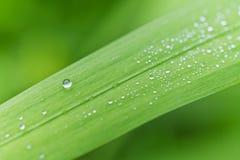 Herbe verte fraîche Image stock
