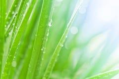 Herbe verte fraîche Image libre de droits