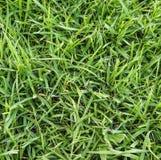 Herbe verte fraîche Photographie stock libre de droits