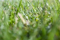 Herbe verte fraîche Photo libre de droits