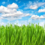 Herbe verte fraîche avec des baisses de l'eau l'environnement de concept de soin de fond a isolé le petit blanc d'arbre de prise Image stock