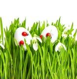 Herbe verte fraîche avec des fleurs et des oeufs de pâques Image libre de droits