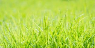 Herbe verte fraîche avec la gouttelette d'eau sur le soleil Photographie stock libre de droits