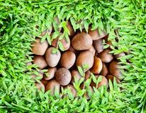 Herbe verte fraîche avec la pierre Photos libres de droits