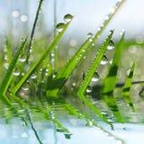Herbe verte fraîche avec le plan rapproché de baisses de rosée photos stock