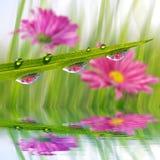 Herbe verte fraîche avec le plan rapproché de baisses de rosée photographie stock libre de droits