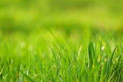 Herbe verte fraîche en tant que fond de printemps Photographie stock libre de droits