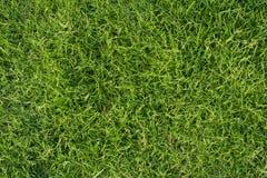 Herbe verte fraîche pour le fond Texture de pelouse de parc images stock