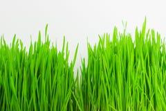Herbe verte fraîche sur le fond blanc Photos libres de droits