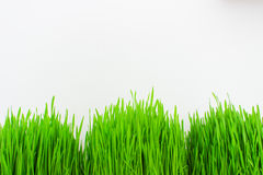 Herbe verte fraîche sur le fond blanc Images stock
