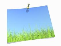 Herbe verte fraîche sur le fond de ciel bleu Photographie stock