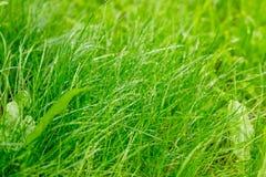 Herbe verte fra?che avec la ros?e Fond de fines herbes vert naturel Vue au ch?teau de patrimoine mondial de Cesky Krumlov Nature  images stock