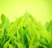 Herbe verte fraîche Images libres de droits